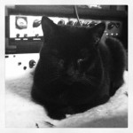 It_s_always_nice_to_have_an_extra_pair_of_ears_while_you_re_mixing.__cat_March_29__2014_at_0252PM